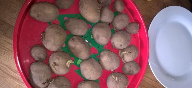kartoffelspirer